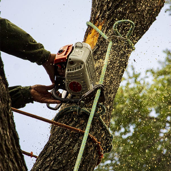 Tree Removal with Saw Dust